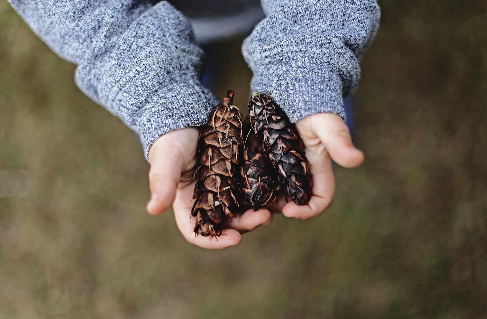 Latest News | Littlebuttercups Nursery | Trawden | Colne
